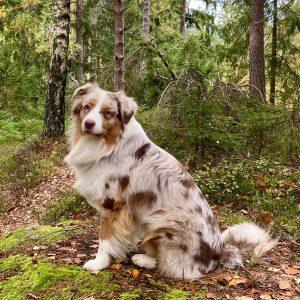 """Sammy nachzucht9 2 300x300 - Yellowstone's Pure Spirit """"Sammy"""""""