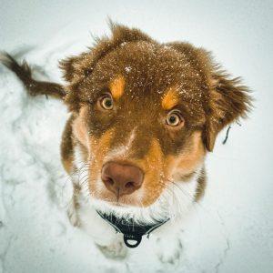 Koda sendet Schnee Grüsse Bild 1 300x300 - Koda sendet Schnee Grüsse