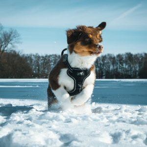 Koda sendet Schnee Grüsse Bild 4 300x300 - Koda sendet Schnee Grüsse