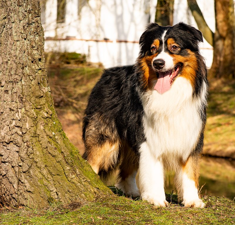 Lukier hund1 2 800x768 - Redivivus Lukier