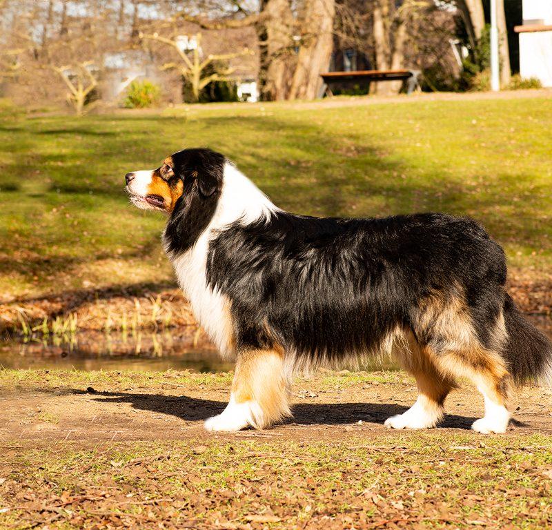 Lukier hund10 2 800x768 - Redivivus Lukier