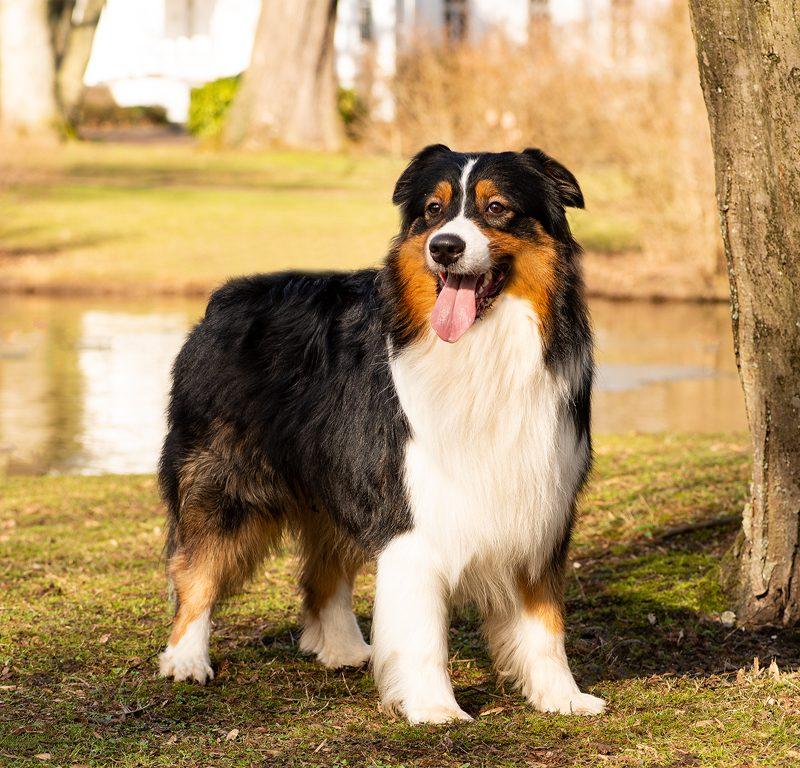 Lukier hund2 2 800x768 - Redivivus Lukier