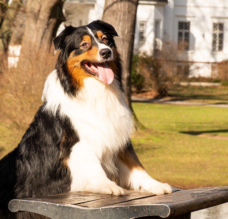 Lukier hund3 2 800x768 - Redivivus Lukier