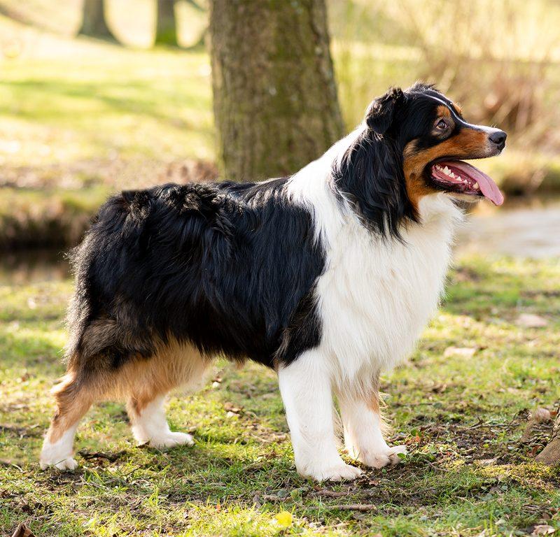 Lukier hund5 2 800x768 - Redivivus Lukier