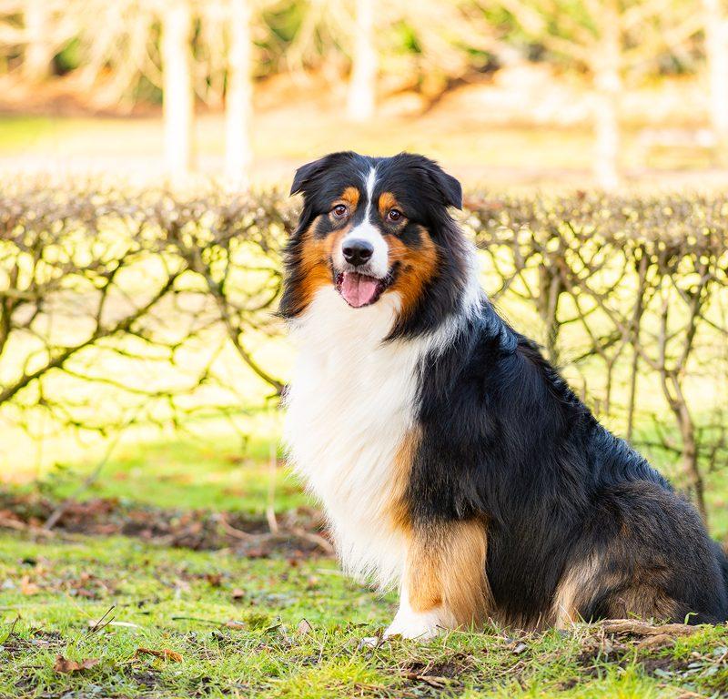 Lukier hund6 2 800x768 - Redivivus Lukier