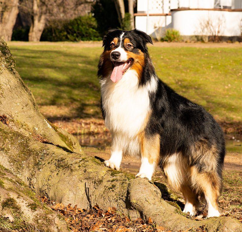 Lukier hund7 2 800x768 - Redivivus Lukier