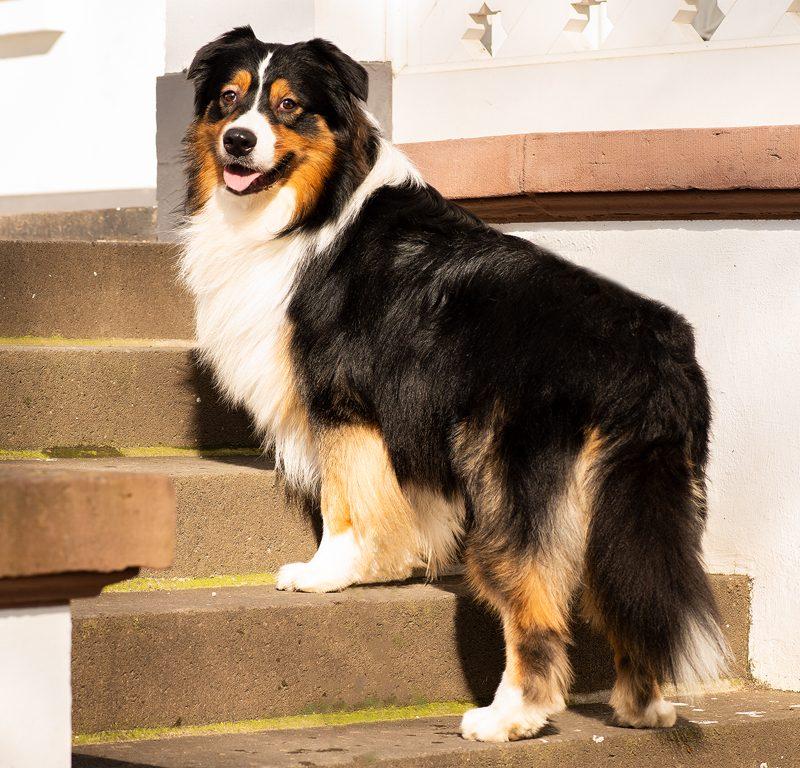 Lukier hund8 2 800x768 - Redivivus Lukier