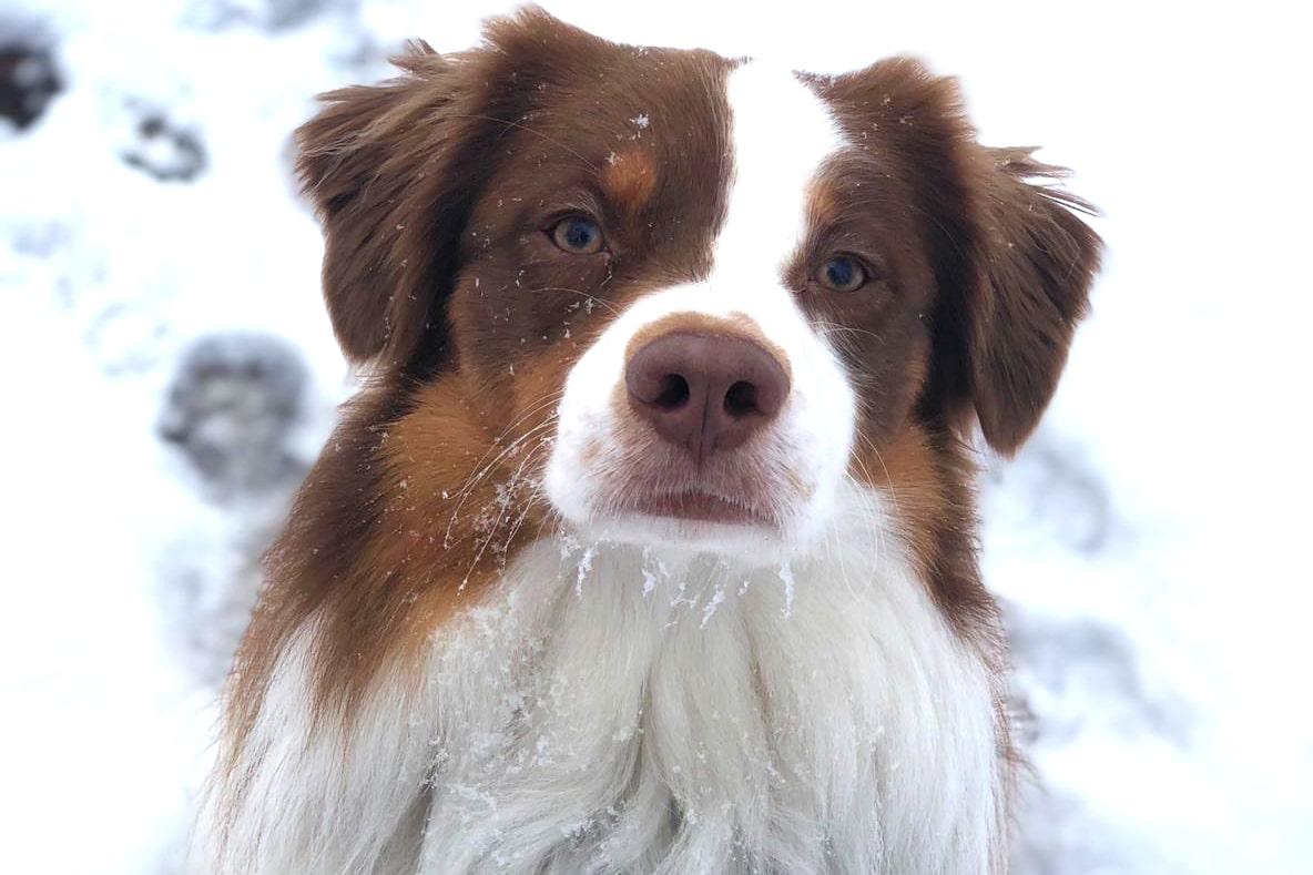 schneebamboo - Schnee-Gastritis