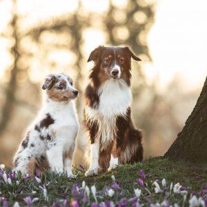 Taya Nuri senden Fruehlingsgruesse Bild 2 300x300 - Taya & Nuri senden Frühlingsgrüße
