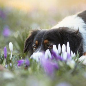 Taya Nuri senden Fruehlingsgruesse Bild 4 300x300 - Taya & Nuri senden Frühlingsgrüße