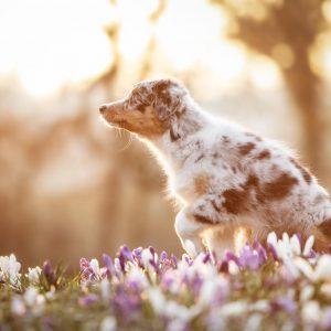 Taya Nuri senden Fruehlingsgruesse Bild 6 300x300 - Taya & Nuri senden Frühlingsgrüße