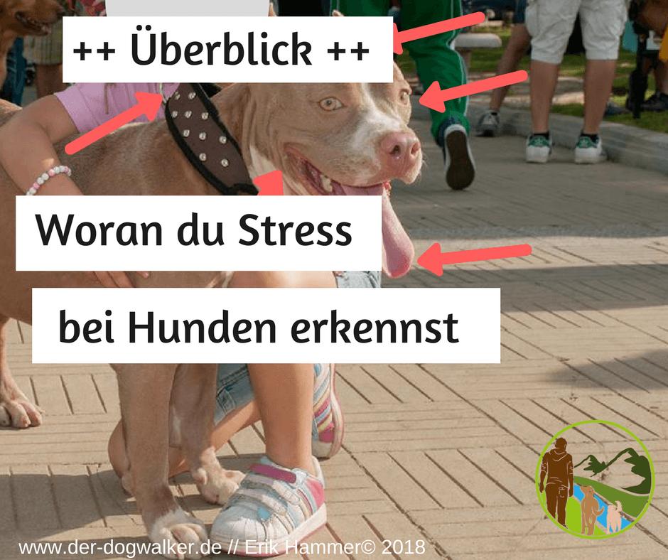 Woran du Stress beim Hund erkennst » Der Dogwalker