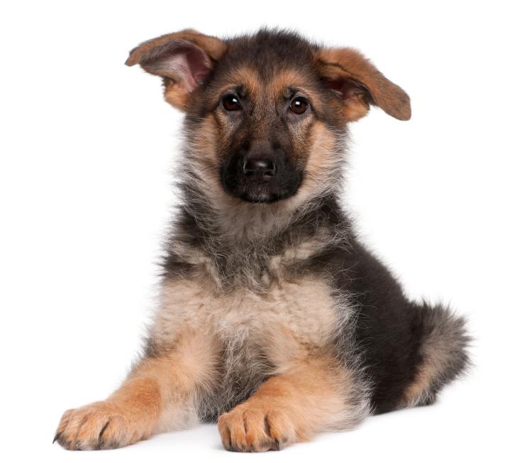 Bauchspeicheldrüsenschwäche beim Hund
