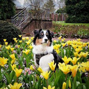 Buddy schickt Fruehlingsgruesse Bild 1 300x300 - Buddy schickt Frühlingsgrüße
