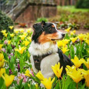 Buddy schickt Fruehlingsgruesse Bild 2 300x300 - Buddy schickt Frühlingsgrüße