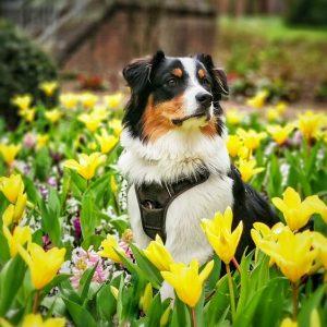 Buddy schickt Fruehlingsgruesse Bild 3 300x300 - Buddy schickt Frühlingsgrüße