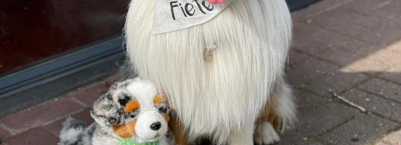 Fiete-ist-Therapiehund-Beitragsbild.jpg