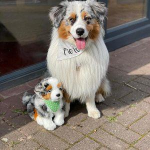Fiete ist Therapiehund Bild 2 300x300 - Fiete ist Therapiehund