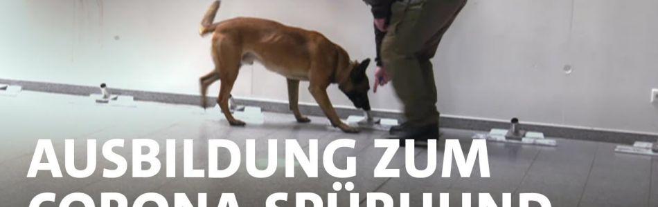Infos-Die-Virus-Schnueffler-Gelingt-die-Ausbildung-zum-Corona-Spuerhund-SWR-Doku-Beitragsbild.jpg