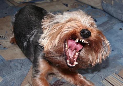 Stress beim Hund - Verhalten und Leistung Teil 1
