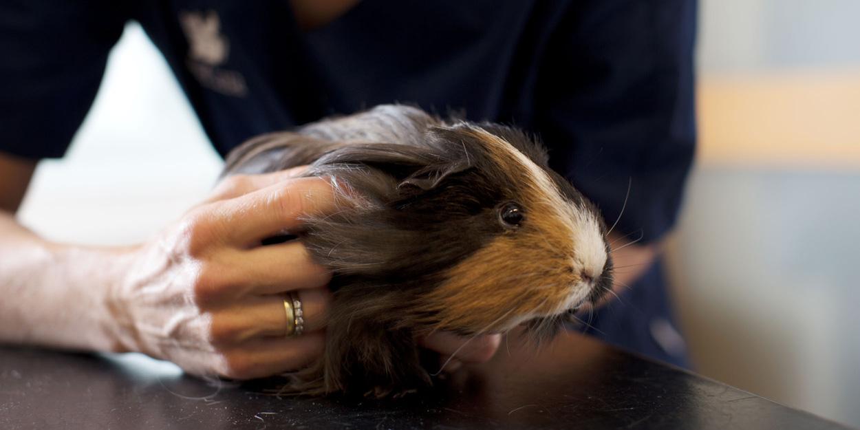 Blausäurevergiftung beim Tier | AniCura Deutschland