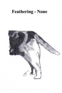 A Tale of Tails - Australian Shepherd Health & Genetics Institute