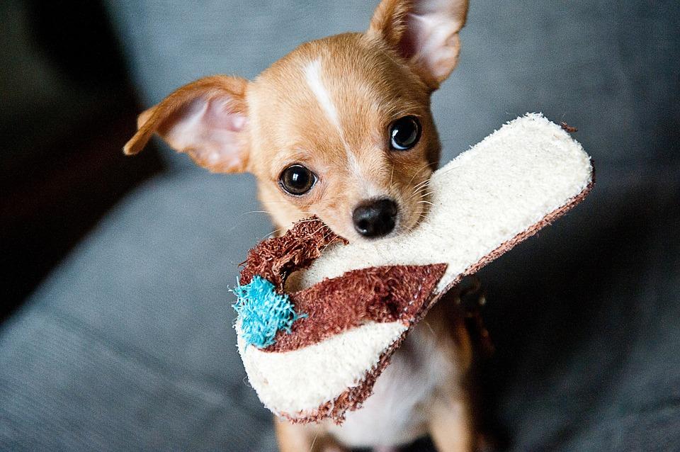 Wie mache ich mein Haus Welpensicher? • Couchdogs