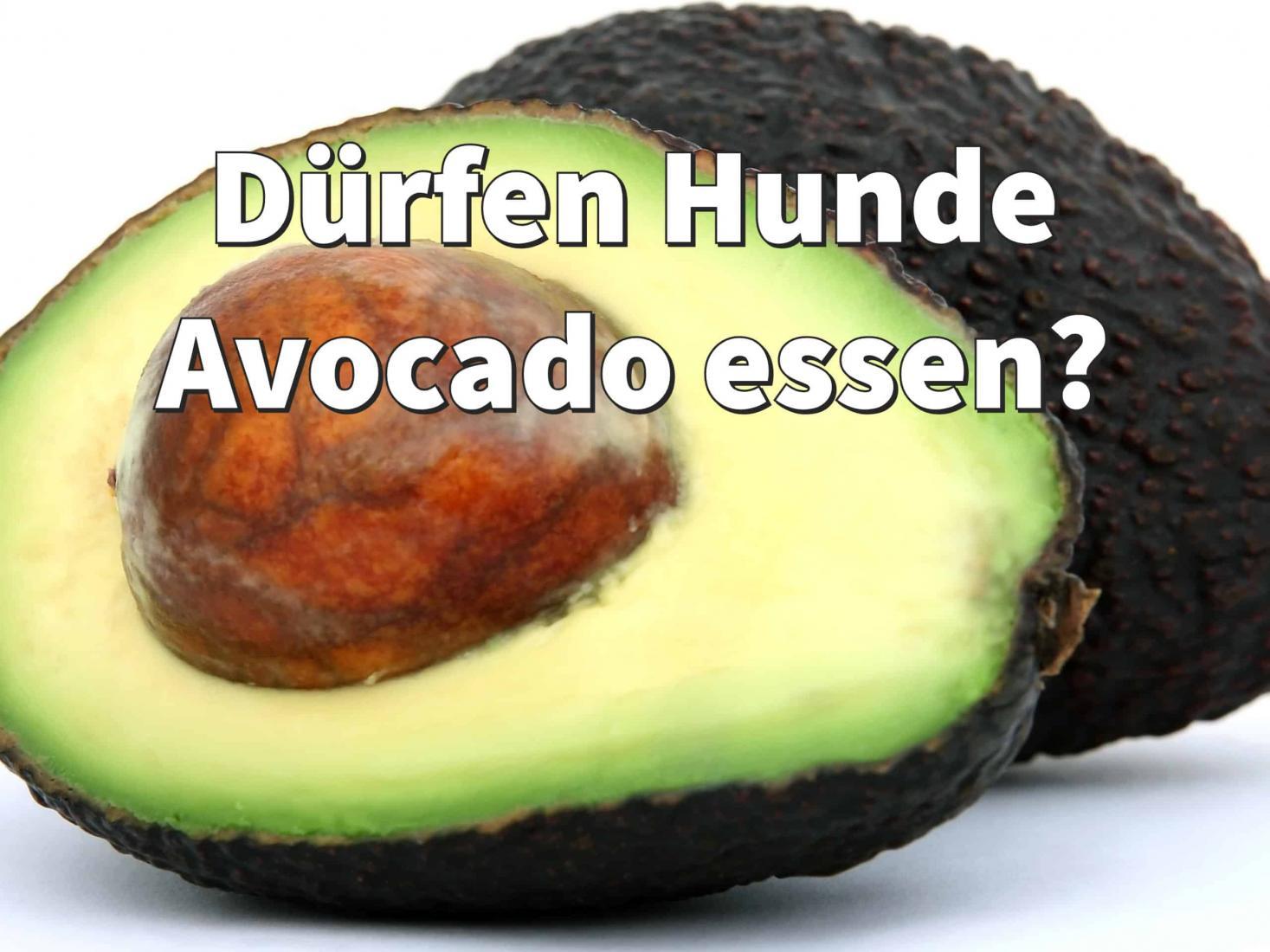 Dürfen Hunde Avocado essen? Das sollten Sie beachten! Dogco.de