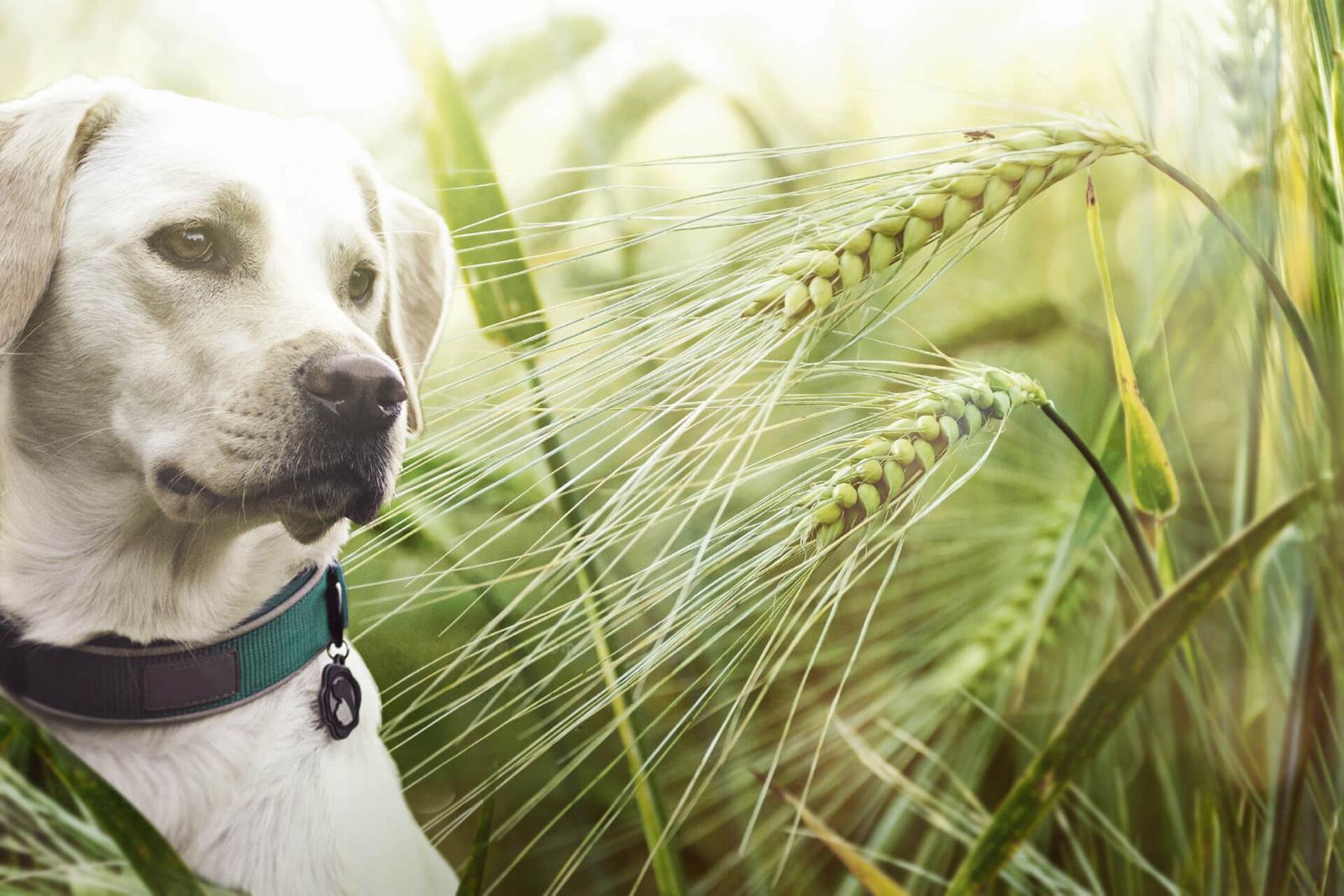 Grannen im Sommer sind eine tödliche Gefahr für deinen Hund | Tractive