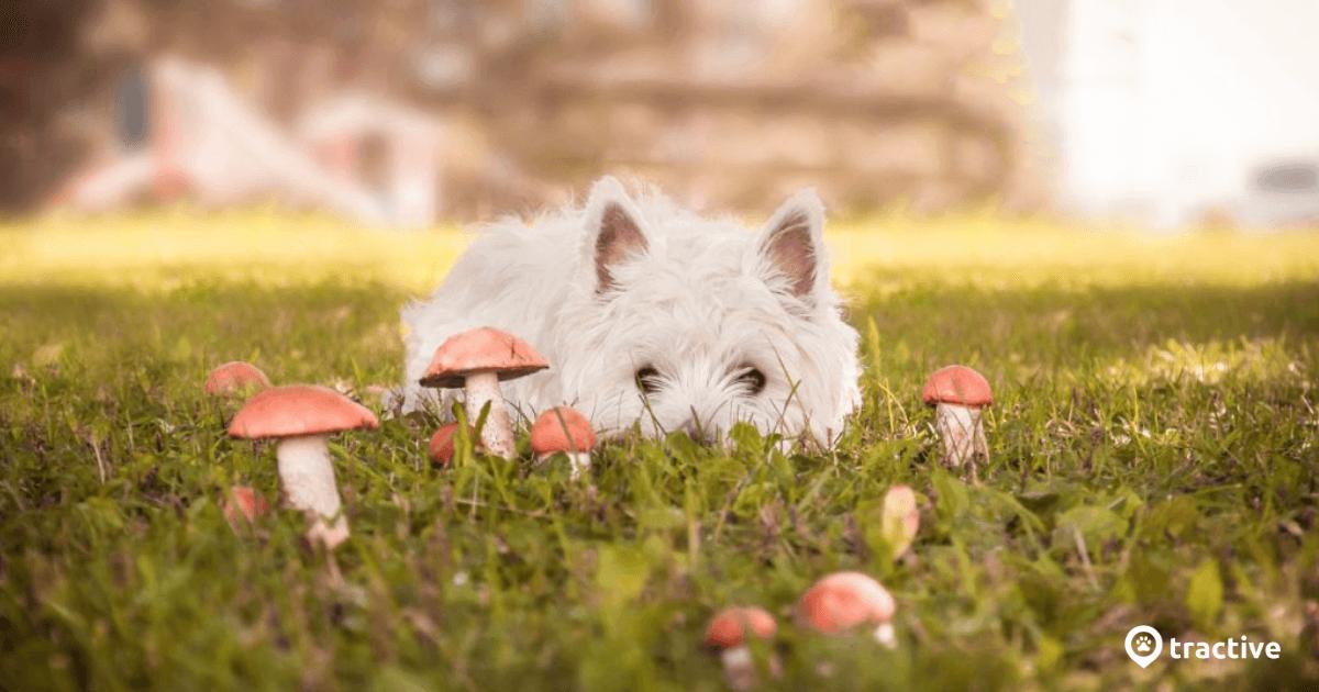 Giftige Pflanzen für Hunde: Diagnose & Symptome | Tractive
