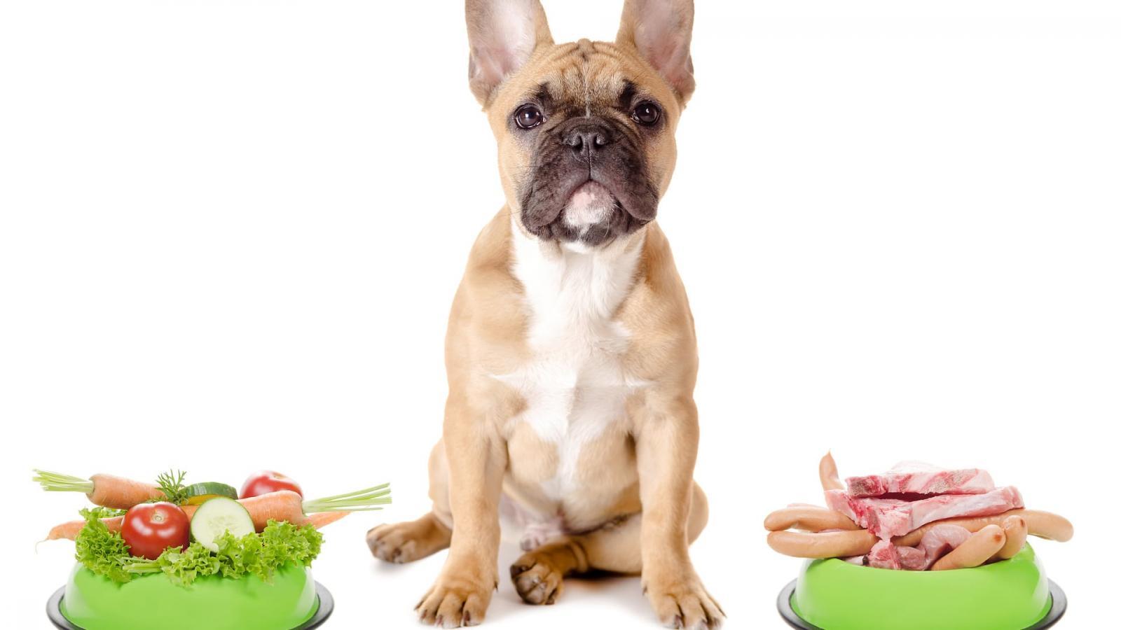 Fleischloses Futter: Kann man seinen Hund vegetarisch ernähren?