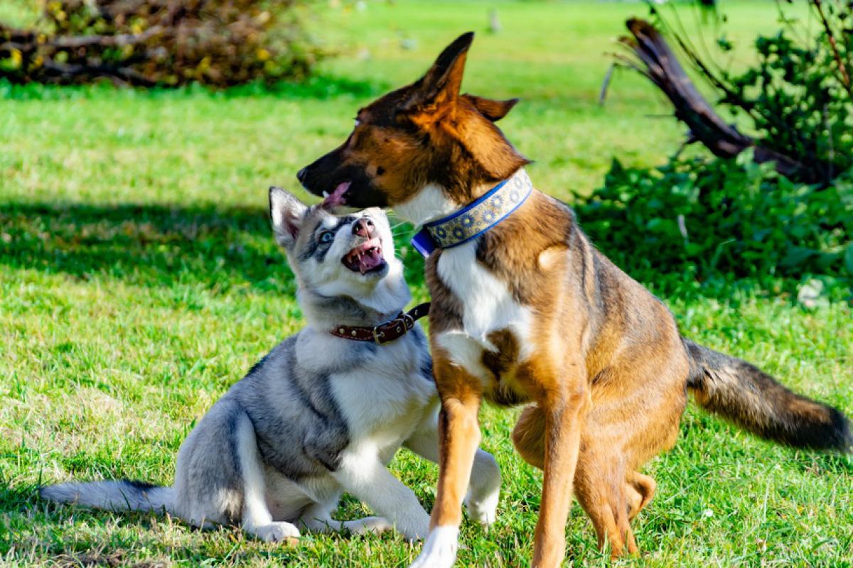 Übersprungshandlung bei Hunden - Hundemagazin