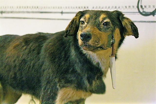 Pawlowscher Hund – Wikipedia