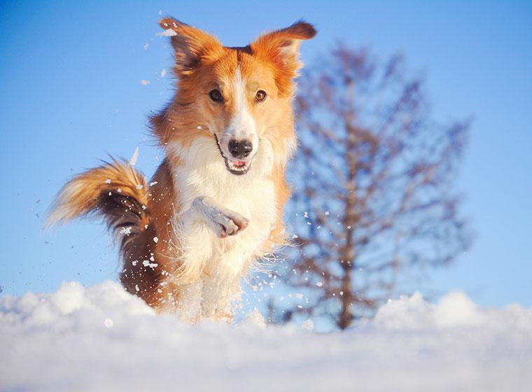Schneegastritis beim Hund erkennen und behandeln | ZooRoyal Magazin