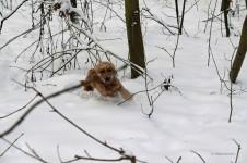 Schneefressen beim Hund -  Das können die Folgen sein | Tiermedizinportal