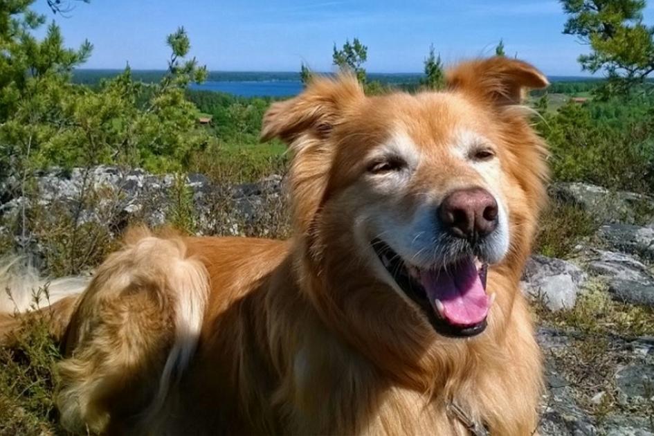 Dogs Worldwide: Schweden - Wufflog