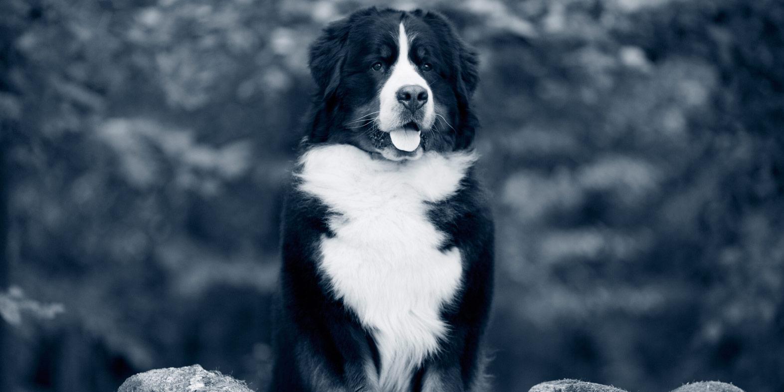 Babesiose beim Hund | Das sollten Halter wissen | AniCura Deutschland