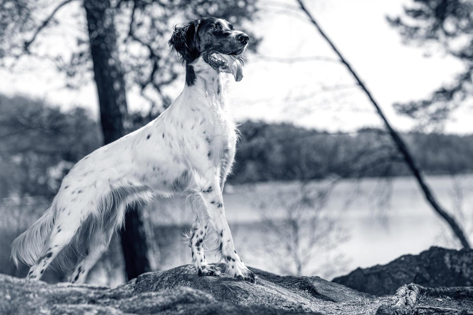 Das Idealgewicht beim Hund mit dem Body Condition Score erkennen | AniCura Deutschland