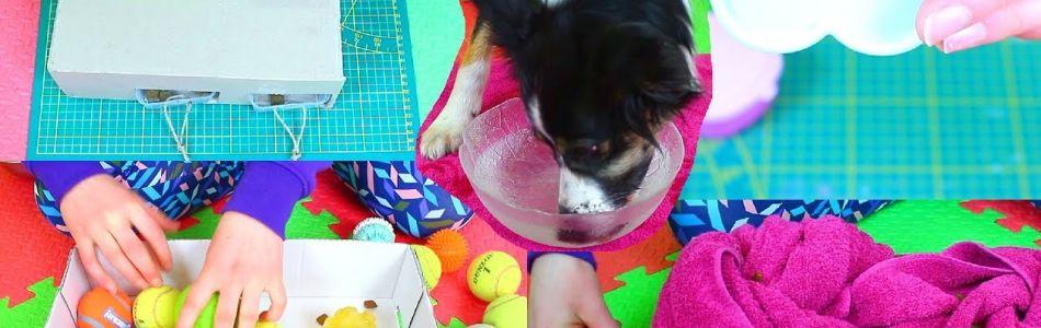 Infos-10-DIY-Dog-Brain-Games-Beschaeftigungsideen-fuer-Hunde-Beitragsbild.jpg