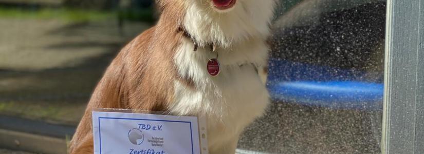 Mocca-ausgebildeter-Therapiehund-Beitragsbild.jpg