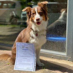 Mocca ausgebildeter Therapiehund Bild 1 300x300 - Mocca ausgebildeter Therapiehund