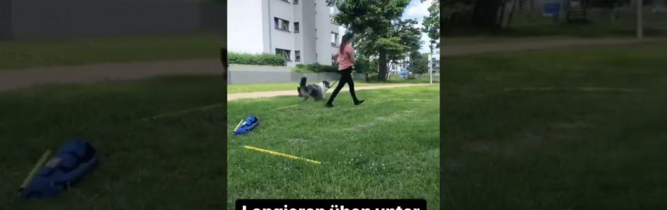 Nachzucht-Levi-beim-longieren-Beitragsbild.jpg