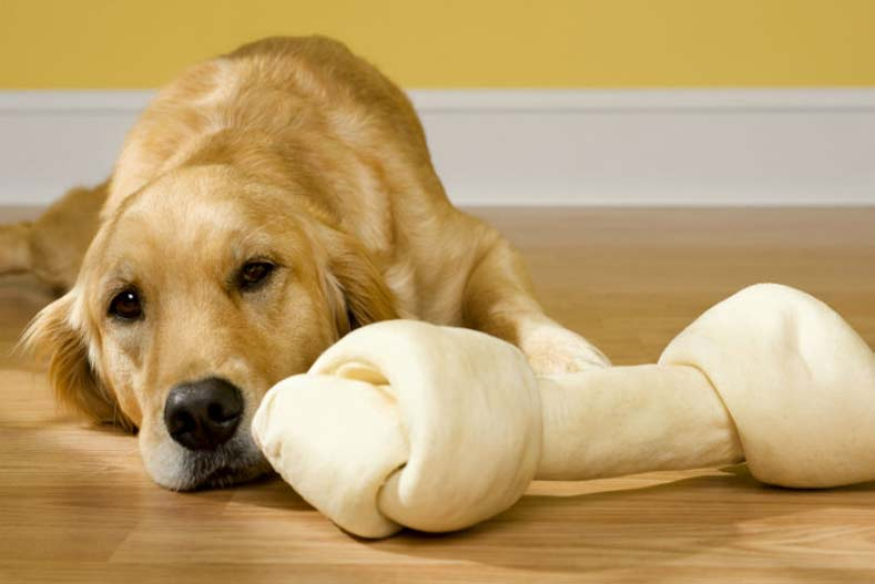Are Rawhide Chews Dangerous for Dogs? – American Kennel Club