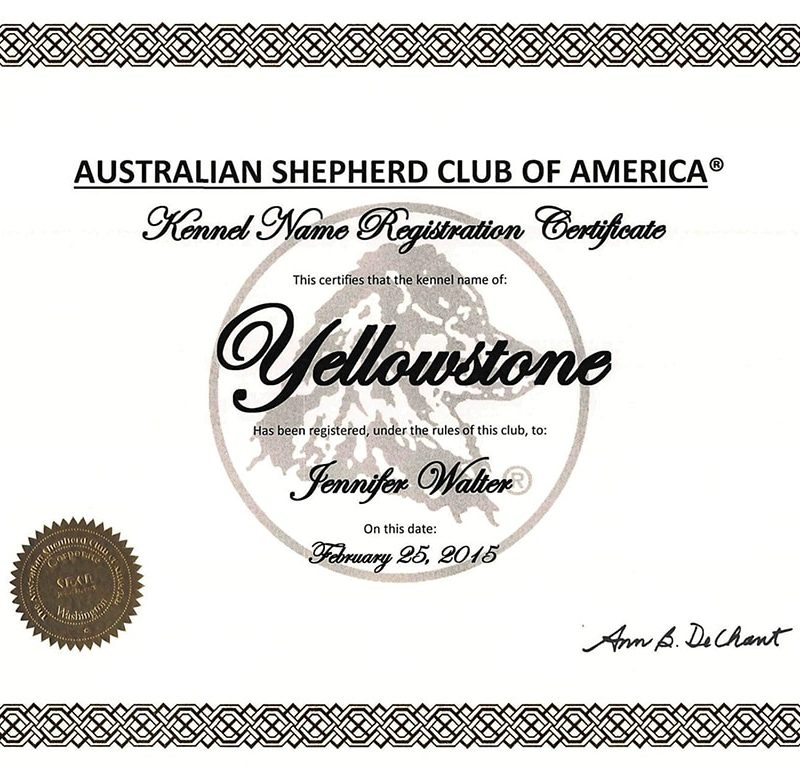 ASCA Yellowstone Kennel Name Registration 800x770 - ASCA Kennelname registrieren