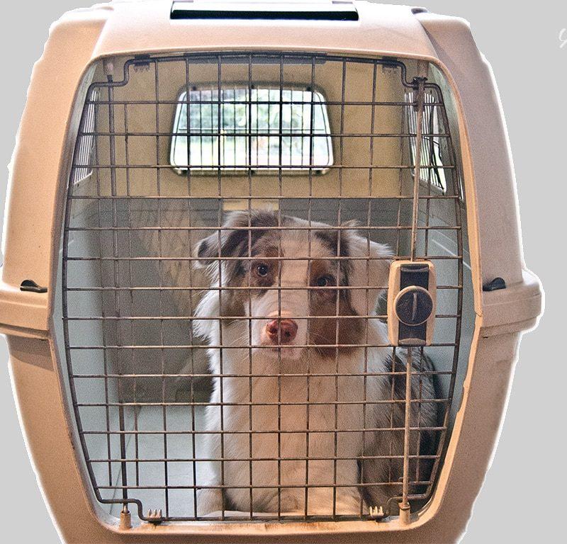 Clipper Idrah Hundebox 800x768 - Welpen-Einkaufsliste