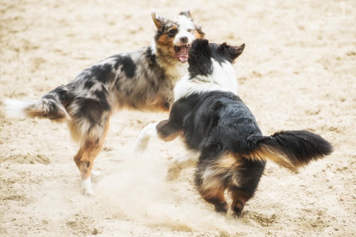 DSC 9039 - Entwicklung des Charakters eines Hundes