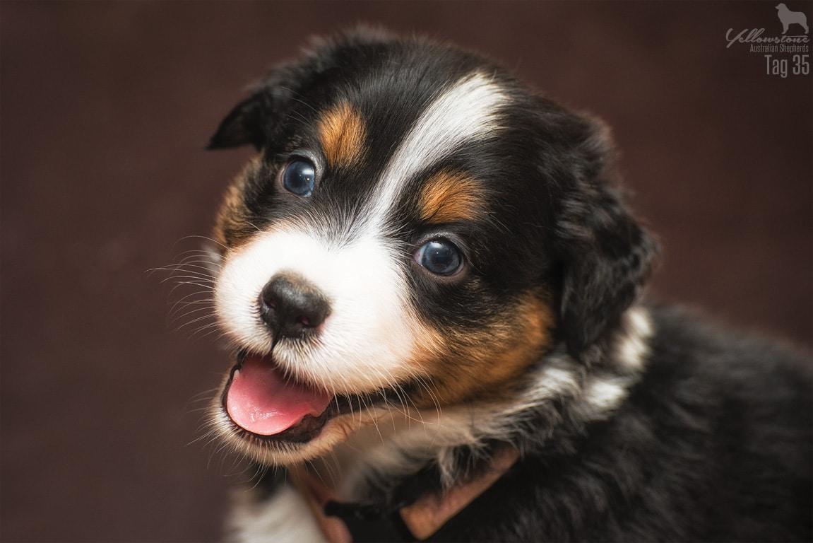 Josie Cooper Seven 8 - Auswirkung der Fellfarbe des Hundes auf das Verhalten