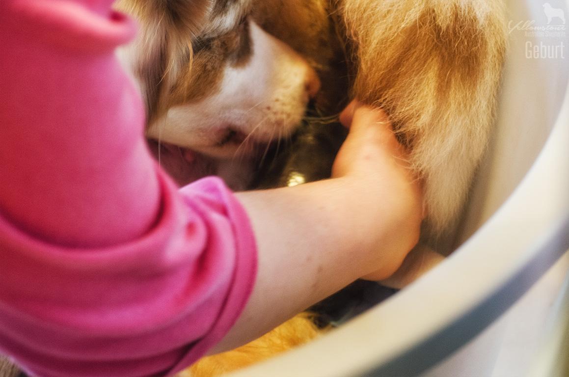 Maisy Stuart Impressionen 1 - Ablauf der Hundegeburt