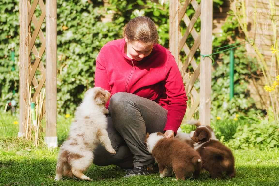 Maisy Stuart Impressionen 103 - Erkennen Welpen ihre Mutter & Geschwister wieder?
