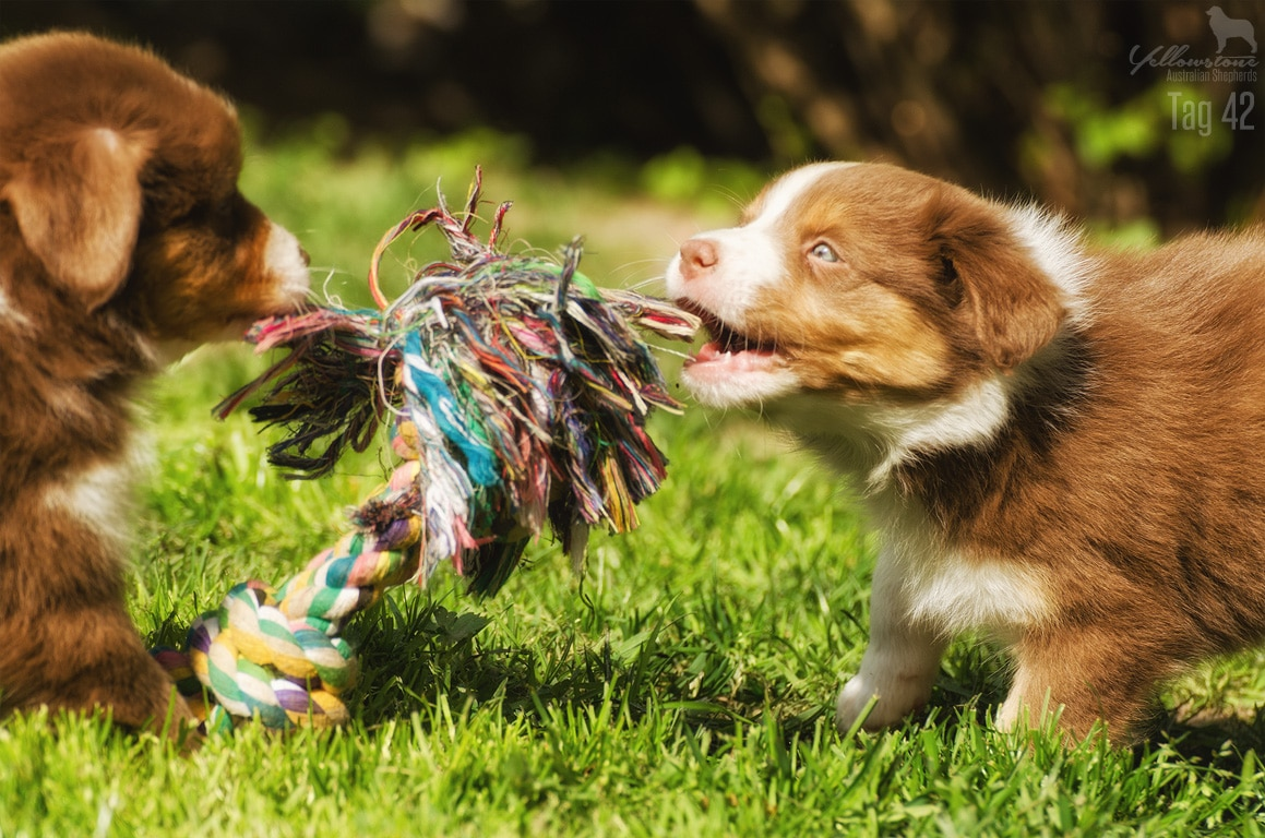 Maisy Stuart Impressionen 115 - Entwicklung des Charakters eines Hundes